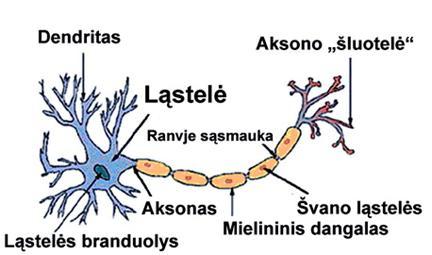 Nervinė ląstelė